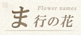 ま行から始まる名前の花