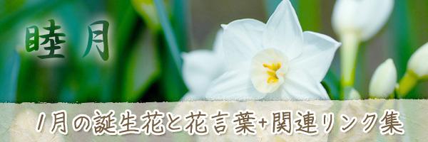 月の花 1月の誕生花と花言葉、英名や別名のまとめ