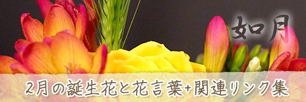 月の花 2月の誕生花と花言葉、英名や別名のまとめ