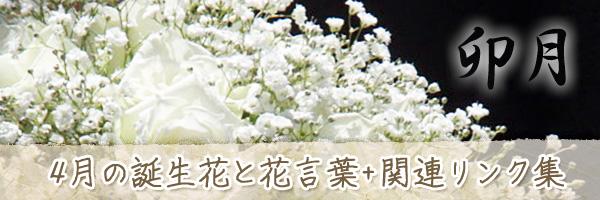 月の花 4月の誕生花と花言葉、英名や別名のまとめ