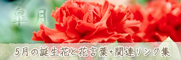 月の花 5月の誕生花と花言葉、英名や別名のまとめ