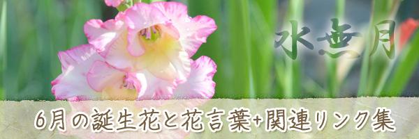 月の花 6月の誕生花と花言葉、英名や別名のまとめ