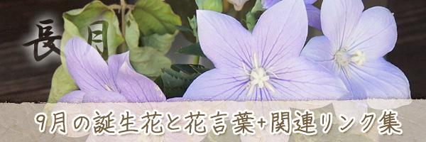 月の花 9月の誕生花と花言葉、英名や別名のまとめ
