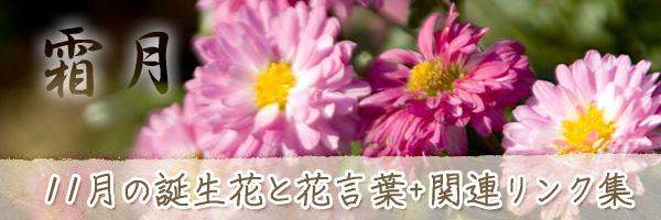 月の花 11月の誕生花と花言葉、英名や別名のまとめ
