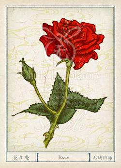 バラ:薔薇 花言葉 誕生花 イラスト
