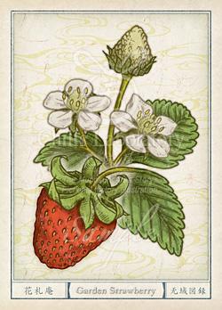 イチゴ:苺 花言葉 誕生花 イラスト
