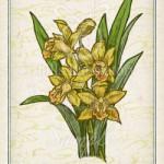 シンビジウム 花言葉 誕生花 イラスト
