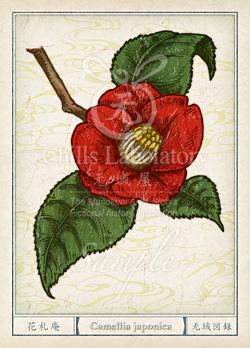 ツバキ 椿 花言葉 誕生花 イラスト