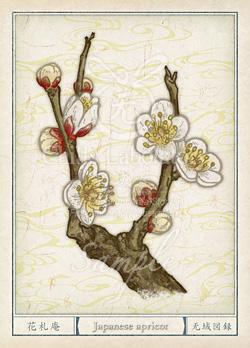 ウメ:梅 花言葉 誕生花 イラスト