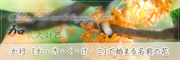か行から始まる名前の花の花言葉・誕生花