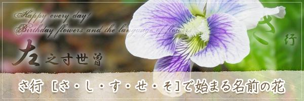 さ行から始まる名前の花の花言葉・誕生花