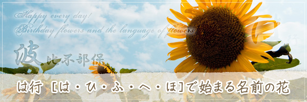 は行から始まる名前の花の花言葉・誕生花