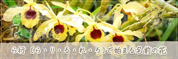 ら行から始まる名前の花の花言葉・誕生花