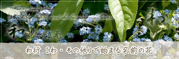 わ行から始まる名前の花の花言葉・誕生花