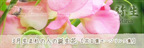 3月生まれの人の誕生花 [花言葉ページリンク集]