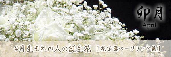 4月生まれの人の誕生花 [花言葉ページリンク集]