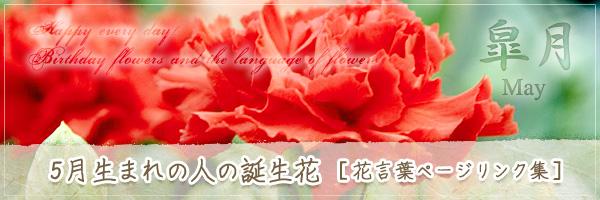 5月生まれの人の誕生花 [花言葉ページリンク集]