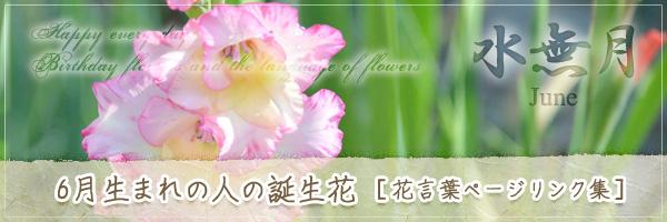 6月生まれの人の誕生花 [花言葉ページリンク集]