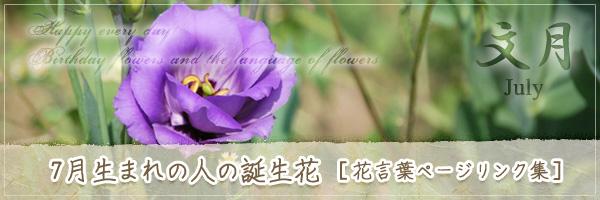 7月生まれの人の誕生花 [花言葉ページリンク集]