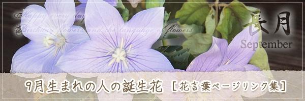 9月生まれの人の誕生花 [花言葉ページリンク集]
