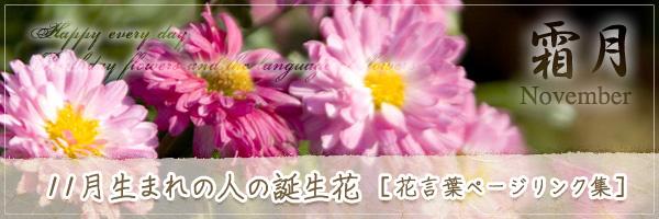 11月生まれの人の誕生花 [花言葉ページリンク集]