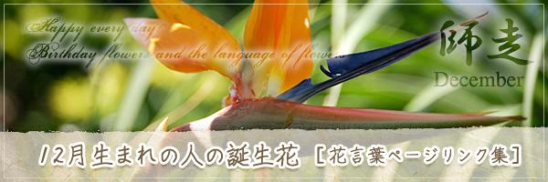 12月生まれの人の誕生花 [花言葉ページリンク集]